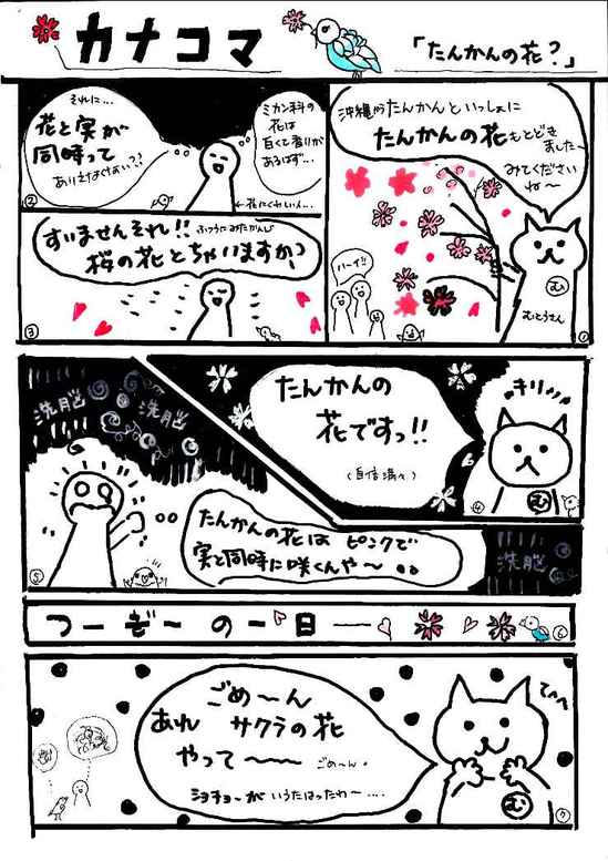 vol4たんかんの花.jpg